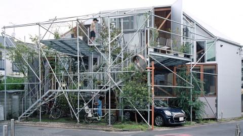 Rumah Bertema Alam yang Terinspirasi Kehidupan Gorila