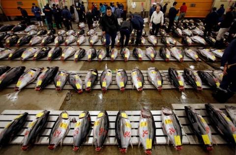 Kemenperin Usulkan Industri Pengalengan Ikan Dapat Stimulus