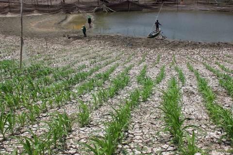 Kementan Dukung Pelibatan Lahan BUMN untuk Pertanian