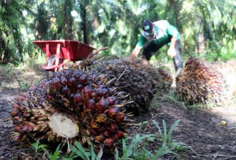 Mei, Harga Referensi CPO dan Biji Kakao Turun
