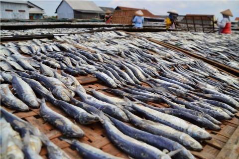 Perindo Butuh Bantuan Pembiayaan untuk Menyerap Ikan Nelayan