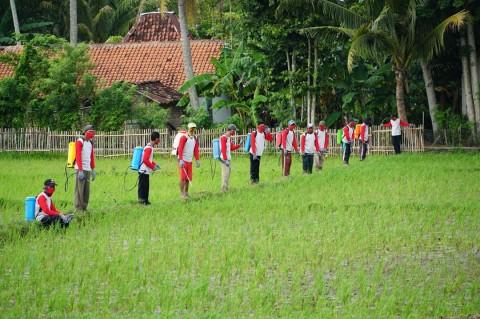 750 Hektare Sawah di Purworejo Diserang Wereng