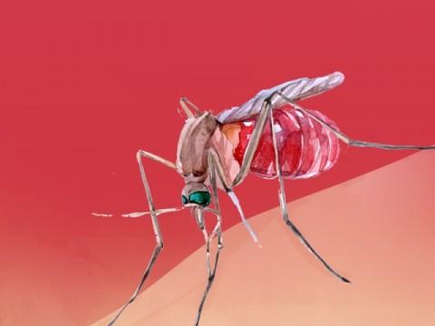 Puluhan Warga Tulungagung Diserang Chikungunya