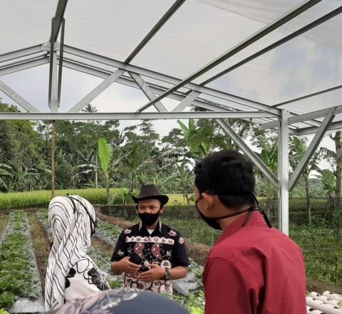 BPPSDMP Kunjungi Kebun Hidroponik Milik Petani Milenial