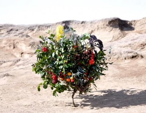 Perkenalkan, Sam Van Aken Si Pembuat Pohon Penghasil 40 Jenis Buah