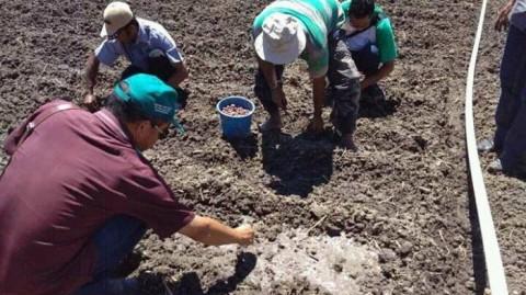 Kostratani Kabupaten Manggarai Dorong Percepatan Tanam Bawang Merah