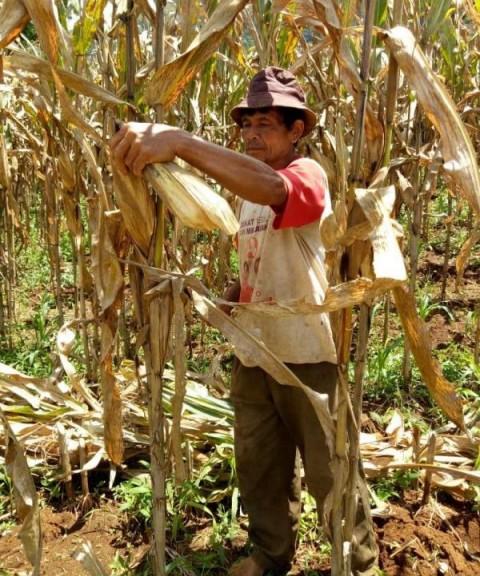 Penyuluh Pertanian Kawal Petani Bandung Lanjutkan Percepatan Tanam