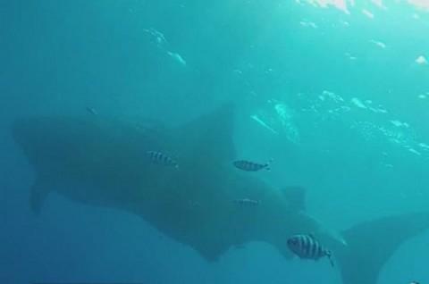 Pria Australia Dijatuhi Denda usai Menyelamatkan Ikan Paus