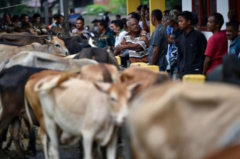 Jelang Meugang, Permintaan Sapi di Aceh Meningkat