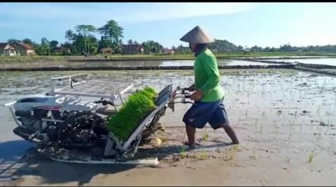Dinas TPHP Lampung Selatan Dorong Petani Lakukan Percepatan Tanam