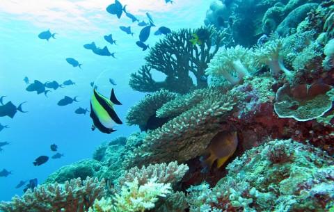 Melihat dari Dekat Laut Wakatobi yang Istimewa