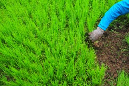 Jokowi Siapkan Rp34 Triliun Subsidi Bunga Kredit Petani
