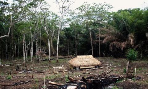 Perjuangan Nenek Berusia 80 Tahun yang Bertahan Hidup dengan Makanan Hutan