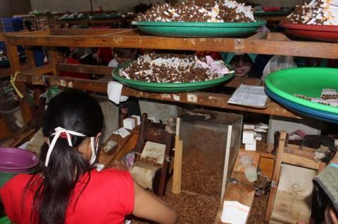 Pemerintah Diminta Perhatikan Kesejahteraan Petani Tembakau