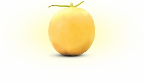 Gama Melon UGM Peroleh Hak Perlindungan Varietas Tanaman dari Kementan