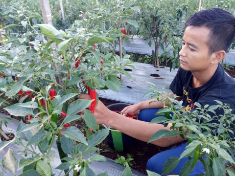 Mahasiswa Polbangtan Dampingi Petani Kembangkan Diversifikasi Pangan