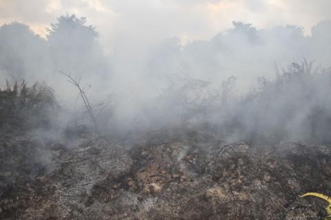 Kebakaran Lahan Gambut Terjadi di Aceh Barat