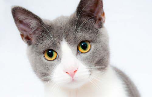 2020 06 Tips Berwisata Bersama Hewan Peliharaan Pet Owners Harus Tahu