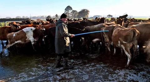 Perkuat Sektor Pertanian, Kunci Sukses Selandia Baru Lawan Covid-19