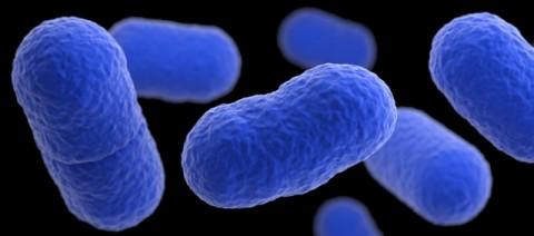 Gejala Infeksi Bakteri Listeria Akibat Jamur Enoki