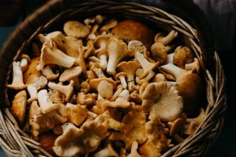 Jamur yang Sering Diolah dalam Masakan