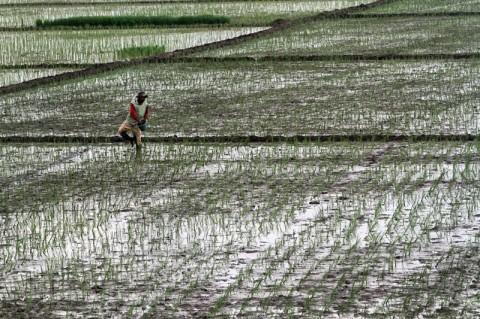 <i>Food Estate</i> Bisa Kembangkan Infrastruktur di Kalteng