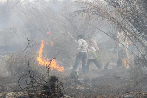 Kalimantan Tengah Tetapkan Status Siaga Darurat Karhutla
