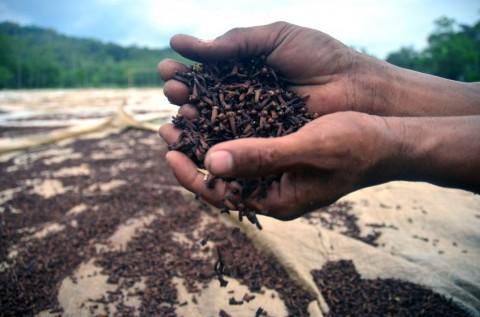 Gubernur Sulut Harap Pemerintah Tangguhkan PPN Petani Cengkeh