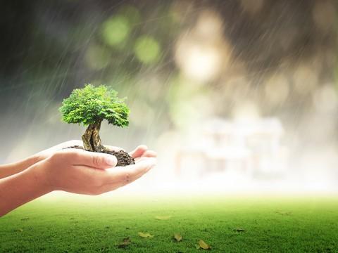 Bogor, Cibodas Botanical Gardens Reopen to Public from July 7: LIPI