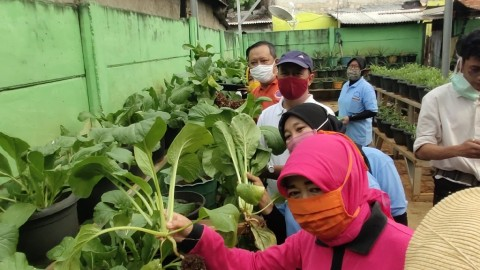 Sudin KPKP Panen Sayur Hidroponik di Tengah Pandemi