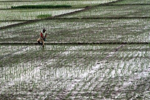 Wagub DKI Berharap Jakarta Berkontribusi di Sektor Pertanian