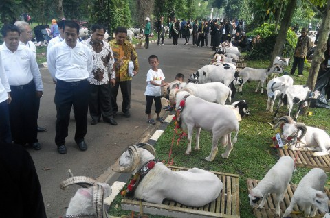 Pembuangan Limbah Sampah di Lebak Dorong Usaha Ternak Domba
