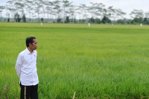 4 Pakar Beri Saran Agar Program <i>Food Estate</i> Jokowi Berhasil