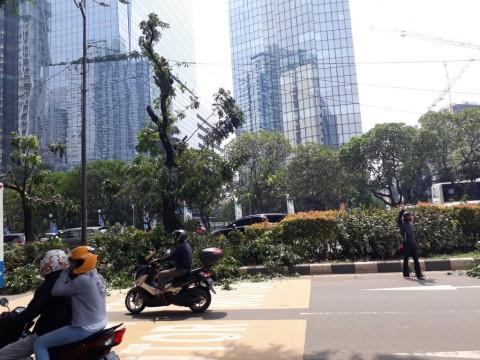 4.639 Pohon di Jakarta Dipangkas Ranting