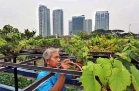 Mengatasi Krisis Pangan dengan Urban Farming