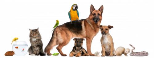 Memelihara hewan lucu dan unik juga bisa menjadi alternatif obat kejenuhan. (Foto: Ilustrasi. Dok. Freepik.com)