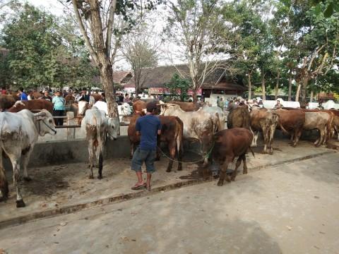 Protokol Penyembelihan Hewan Kurban di Jakarta