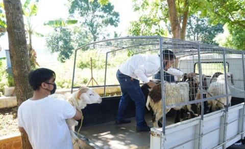 Unpad Siap Kurban 85 Ekor Domba