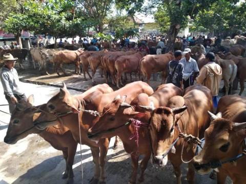 Baiturrahman Aceh Sembelih 300 Ekor Hewan Kurban