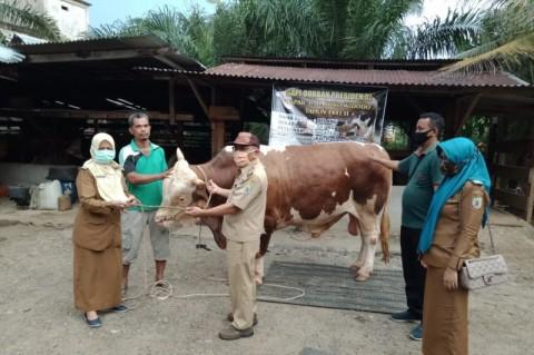 600 KK di Lebong Bengkulu Terdaftar Jadi Penerima Kurban Presiden