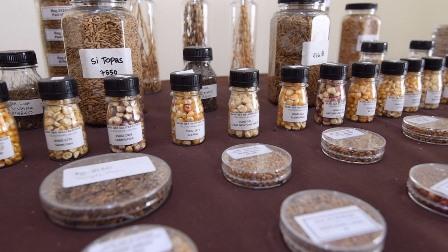 Indonesia Miliki Sumber Daya Genetik Pertanian Melimpah