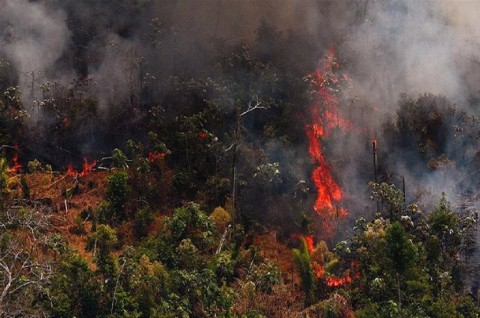 Jumlah Kebakaran Hutan Amazon Meningkat di Atas 6.000
