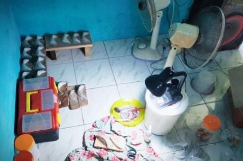 Seorang Warga Sampit Palsukan Sarang Walet Berbahan Mi Sohun