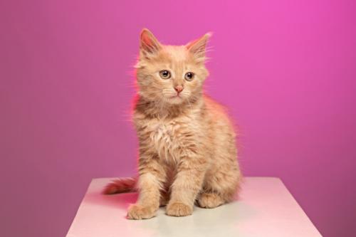 Pemilik kucing sebaiknya melakukan steril terhadap kucing-kucing mereka untuk mencegah kelahiran yang tidak diinginkan. (Foto: Ilustrasi. Dok. Freepik.com)