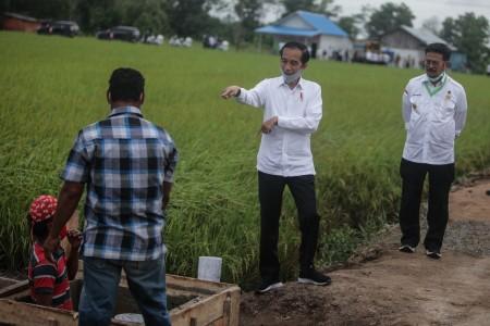 770 Ribu Hektare Lahan Disiapkan untuk Program <i>Food Estate</i>