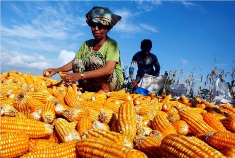 Kemenkeu Sempurnakan Mekanisme Pungutan Pajak Hasil Pertanian