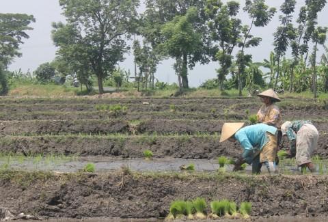 Menjaga Sektor Pertanian agar Kinerja Ekspor Membaik