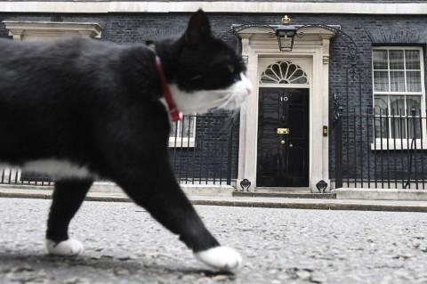 Kucing 'Penjaga' Kantor Kemlu Inggris Segera Pensiun