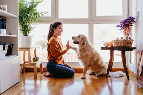 Cara Mengajarkan Rutinitas Harian untuk Anjing Peliharaan