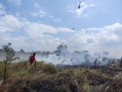 53 Hektare Lahan di Sumsel Terbakar